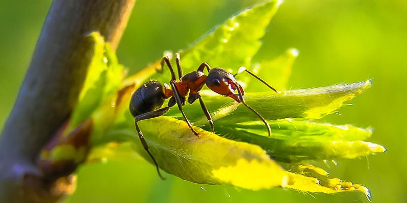 Tips to Select the Best Bug Extermination Company